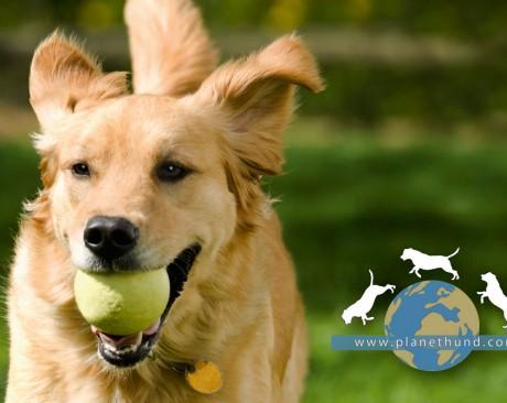 Hundeportal Community Magazin